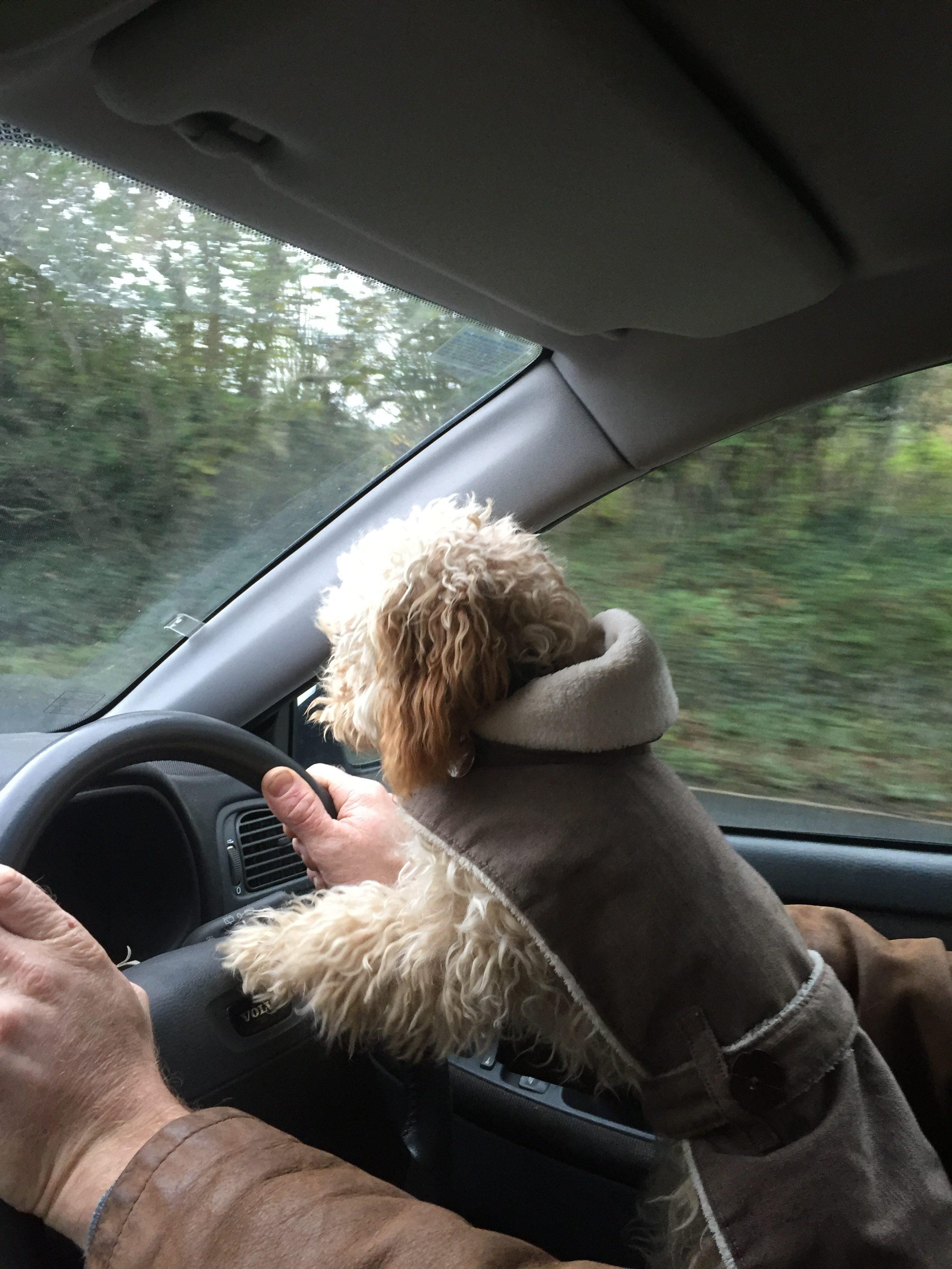 dog coat with belt