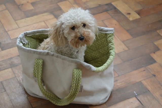 Quilted canvas dog carrier tote bag